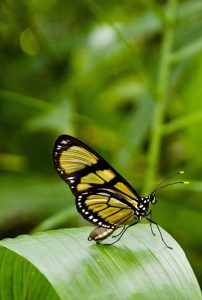 Life and executive coaching with Abhiyana Michelle Singer, transform your life: image of a butterfly