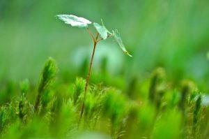 blog header image - leaf