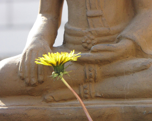 Buddha statue with yellow flower image